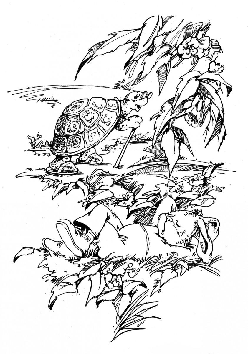 Раскраски заяц и черепаха
